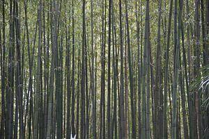 Het dichte bamboebos
