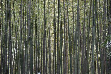 Der dichte Bambuswald von whmpictures .com