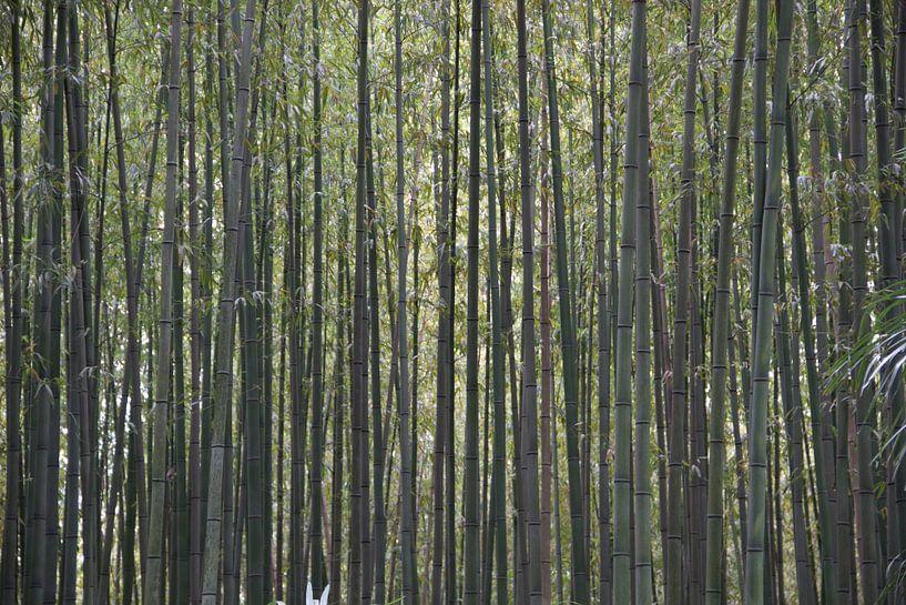 Het dichte bamboebos van whmpictures .com
