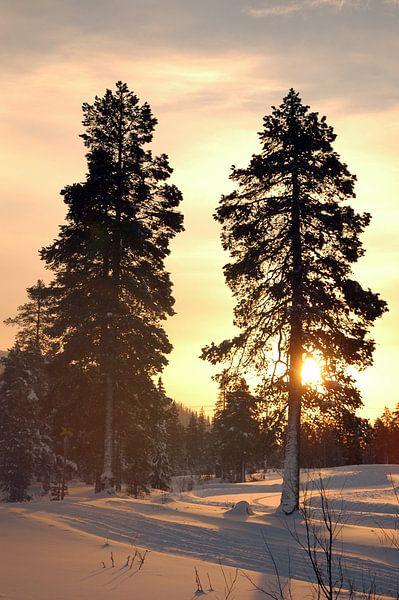 Zweedse zonsondergang van Barbara Koppe