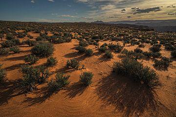 Plaines désertiques fertiles sur