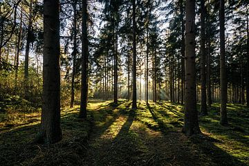 Bomen in tegenlicht van Peter van Nugteren