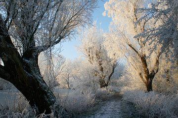 Een bijzondere winterochtend. sur Rens Kromhout