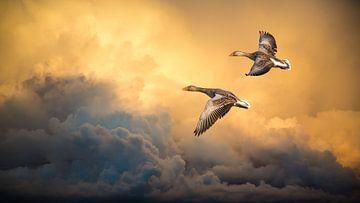 Wilde ganzen tegen spectaculaire wolkenlucht van Inge van den Brande