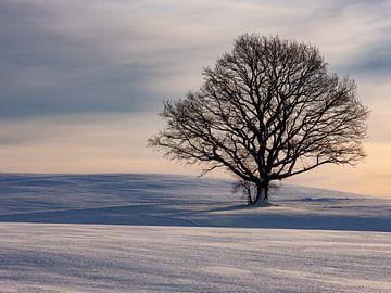 Winterstimmung mit Baum