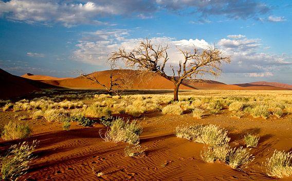 Boom bij rode zandduinen (Sosusvlei) in Namibië van Jan van Reij