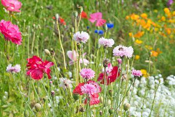 Wilde roze bloemen in het veld van J..M de Jong-Jansen