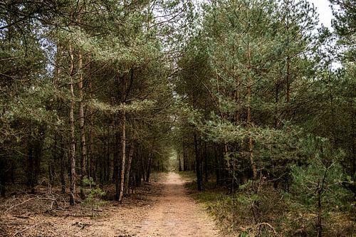 Zandpad tussen bomen op de Veluwe
