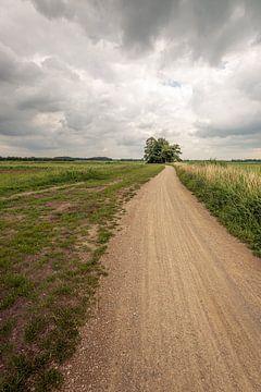 Schlängelnder Pfad durch eine niederländische Polderlandschaft von Ruud Morijn