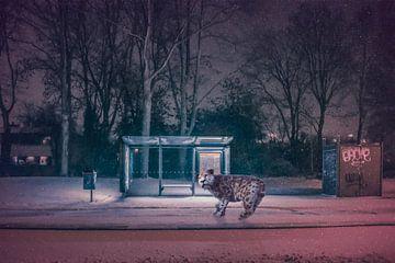 De busstop van Elianne van Turennout