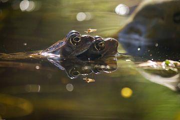 Frogs von Ron van Ewijk