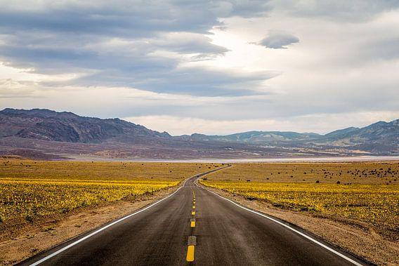 De 'superbloom' van 2016 in Death Valley van Jasper den Boer