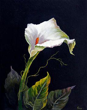 Anthurium sur Ria Butter - Gotje