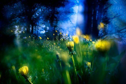 zomeravond in de magische tuin