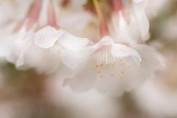 Morgentau im Frühling von Cathy Roels