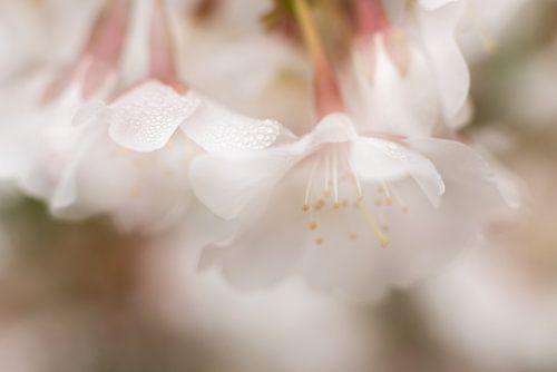 Ochtenddauw in de lente