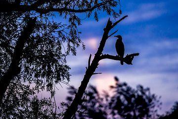Kormoran-Silhouette von Gijs Verbeek