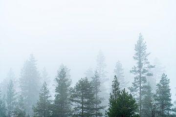 Baumwipfel im Nebel. von Axel Weidner