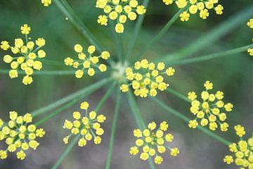 Yellow Stars von Karin Hendriks Fotografie