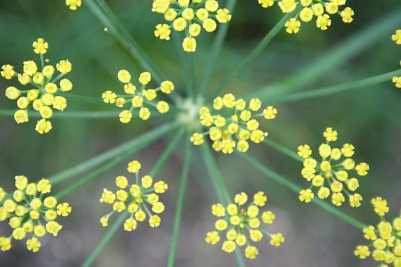Yellow Stars van Karin Hendriks Fotografie