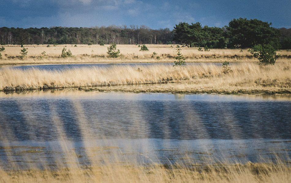Kampinase Heide en Vennen van Ronne Vinkx