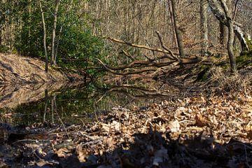 Omgevallen boom boven het water