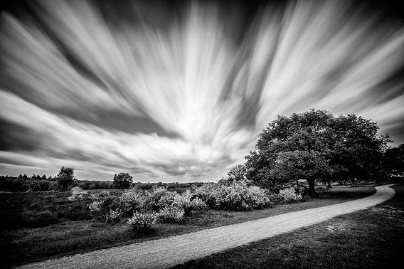 Slingerend fietspad op de heide van het Loosdrechtsebos  (Zwart-wit) van John Verbruggen
