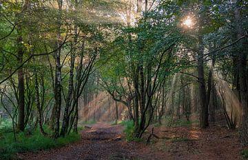 Mystiek bos van Margreet Piek