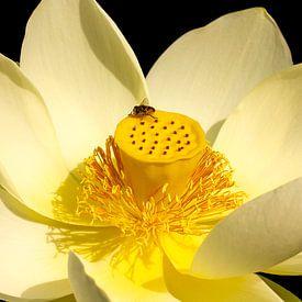 Lotusbloem met insect van Corrie Ruijer