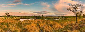 Panorama van Nationaal Park Dwingelderveld