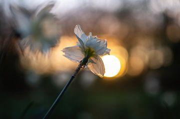 Blumen Teil 103 von Tania Perneel