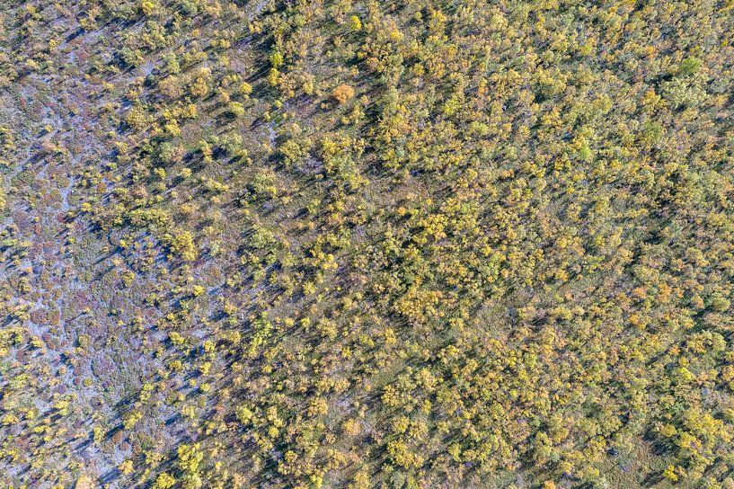 Natures patterns van Jeroen Kleiberg