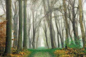 Wald Wandbilder Vorschau