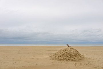 Meeuw op het strand van Johan Vanbockryck