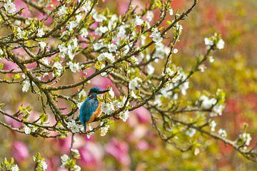 Ijsvogel in bloesem van Desiree Adam-Vaassen