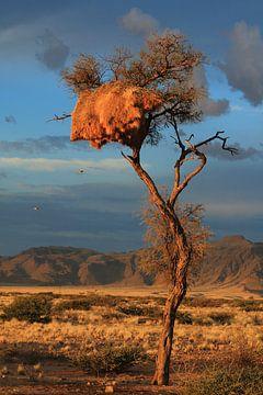 Boom met sociale wevers nest in Namibie van Bobsphotography