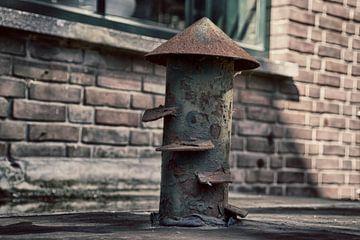 Stalen beeld van een paddenstoel van Ralph Mbekie