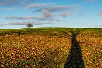 Hoge bomen vangen veel zon van Ellen Gerrits