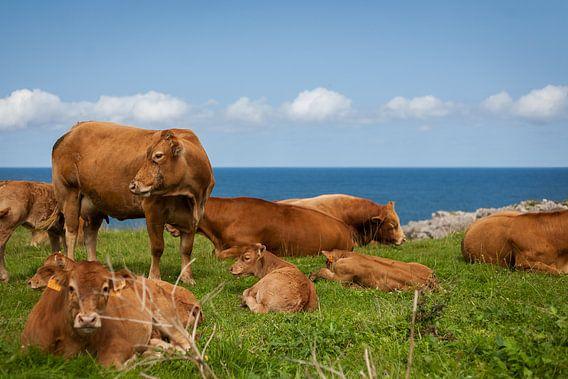 Koeien in een veld bij de zee van Evelien Buynsters