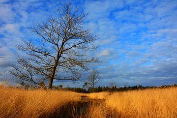 Boom op zonnige winterdag in Noord-Brabant van My Footprints