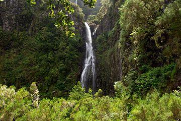 Een waterval midden in de bossen van Madeira Island