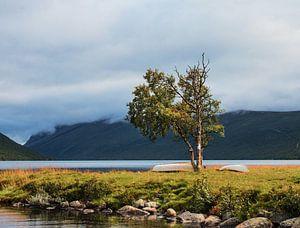 Boom  aan het Helin meer in Noorwegen van Klaas Hollebeek