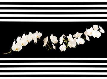 Zwei Orchideen von Tonny Janssen