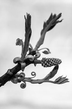 Design by nature (6322) van Tot Kijk fotografie: natuur aan de muur