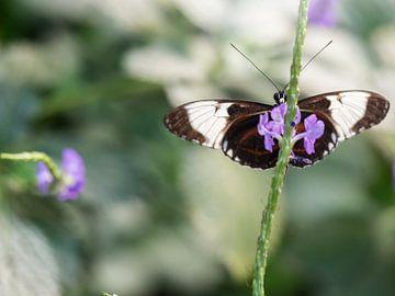 Prachtige vlinder op paarse bloem. van Mariëtte Plat