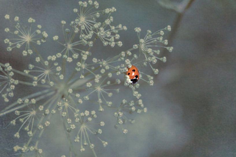 Lieveheersbeestje van Marianne Twijnstra-Gerrits