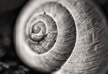The Schier snail I sur