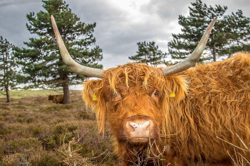 Portrait du Highlander écossais sur Johan Habing