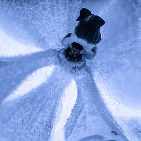 Weiße Orchidee, blau getönt, in Eis 2 von Marc Heiligenstein