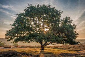 De glorieuze boom
